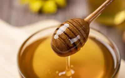 Honigverkostung | Samstag, 12. September 14.30 – 16.30 Uhr