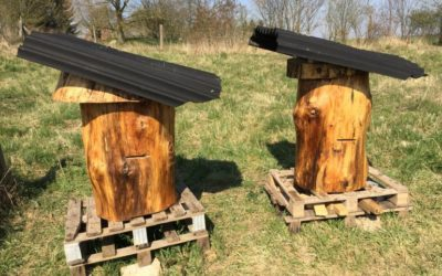Video: Klosterbienen im Fokus